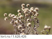 Купить «Прошлогодний сон», фото № 1626426, снято 13 апреля 2010 г. (c) Яременко Екатерина / Фотобанк Лори
