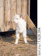 Купить «Молодой козленок», фото № 1628394, снято 9 мая 2009 г. (c) Вячеслав Борисевич / Фотобанк Лори