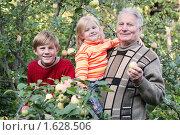 Купить «Дедушка с внуками в саду», фото № 1628506, снято 22 августа 2009 г. (c) Майя Крученкова / Фотобанк Лори