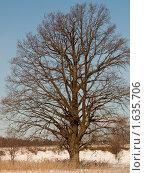 Дерево. Стоковое фото, фотограф Андрей Павлов / Фотобанк Лори