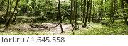 Купить «Место для пикника. Панорама леса.», фото № 1645558, снято 20 апреля 2010 г. (c) Денис Шашкин / Фотобанк Лори