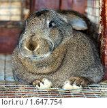 Купить «Кролик», фото № 1647754, снято 10 апреля 2010 г. (c) Михаил Борсов / Фотобанк Лори