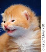 Купить «Рыжий котенок», фото № 1648730, снято 27 марта 2010 г. (c) Арестов Андрей Павлович / Фотобанк Лори