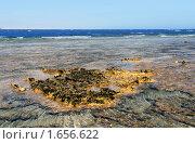 Коралловый риф в бухте Набк Бей (2008 год). Стоковое фото, фотограф ElenArt / Фотобанк Лори