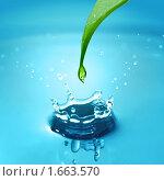 Купить «Травинка со стекающей каплей», фото № 1663570, снято 3 августа 2004 г. (c) Ярослав Данильченко / Фотобанк Лори