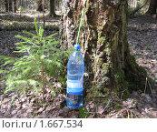 Купить «Бутылка с берёзовым соком», фото № 1667534, снято 29 апреля 2010 г. (c) Плотников Михаил / Фотобанк Лори