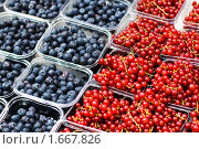 Купить «Лотки со свежими ягодами черники и красной смородины», фото № 1667826, снято 20 апреля 2010 г. (c) Юлия Сайганова / Фотобанк Лори