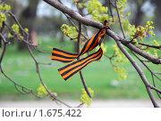 Купить «Георгиевская лента на дереве, развевающаяся на ветру. На Пискарёвском в День Победы.», фото № 1675422, снято 9 мая 2009 г. (c) Светлана Кудрина / Фотобанк Лори