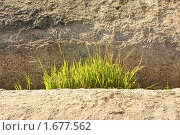 Купить «...И на камнях растет трава...», фото № 1677562, снято 2 мая 2010 г. (c) Галина Бурцева / Фотобанк Лори