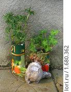 Купить «Рассада цветов в пакетах», эксклюзивное фото № 1680362, снято 3 мая 2010 г. (c) Наталия Шевченко / Фотобанк Лори