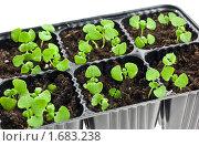 Купить «Рассада в пластиковом мини парнике», фото № 1683238, снято 23 марта 2010 г. (c) Анастасия Золотницкая / Фотобанк Лори