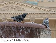 Купить «Фонтан и голуби (У Большого театра)», фото № 1684782, снято 6 мая 2010 г. (c) Валерия Попова / Фотобанк Лори