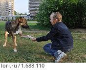 Собака дает лапу девочке (2010 год). Редакционное фото, фотограф Павлова Елена / Фотобанк Лори