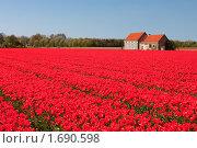 Купить «Цветочное поля, Голландия», фото № 1690598, снято 5 мая 2010 г. (c) Петр Кириллов / Фотобанк Лори