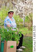 Купить «Пожилая женщина с рассадой помидоров», эксклюзивное фото № 1691510, снято 2 мая 2010 г. (c) Юрий Морозов / Фотобанк Лори