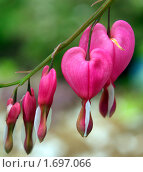 Купить «Разбитое сердце», фото № 1697066, снято 5 мая 2010 г. (c) Natalya Sidorova / Фотобанк Лори
