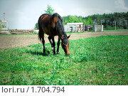 Купить «Лошадь», фото № 1704794, снято 9 мая 2010 г. (c) Ирина Литвин / Фотобанк Лори