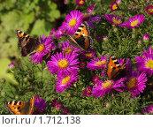 Купить «Бабочки и цветы», фото № 1712138, снято 7 сентября 2008 г. (c) Владимир Соловьев / Фотобанк Лори