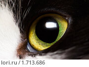 Купить «Кошачий глаз крупным планом», фото № 1713686, снято 11 декабря 2019 г. (c) Швайгерт Екатерина / Фотобанк Лори