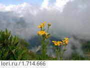 Купить «Горные цветы на фоне облаков», фото № 1714666, снято 21 июля 2009 г. (c) Art Konovalov / Фотобанк Лори