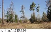 Дорога домой,опушка леса. Стоковое фото, фотограф Осипова Ирина / Фотобанк Лори