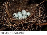 Купить «Гнездо дубоноса», фото № 1723058, снято 13 мая 2010 г. (c) Василий Вишневский / Фотобанк Лори