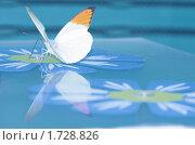 Купить «Отражение», фото № 1728826, снято 21 мая 2009 г. (c) Прошунина Елена / Фотобанк Лори