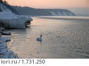 Одинокий лебедь. Стоковое фото, фотограф Svet / Фотобанк Лори