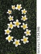 Цифра 8 выложенная из белых цветов на зеленой траве. поздравление с 8 марта. Стоковое фото, фотограф Хайруллина Ирина / Фотобанк Лори