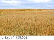 Купить «Поле с созревшим овсом», фото № 1738502, снято 22 августа 2009 г. (c) Алёшина Оксана / Фотобанк Лори