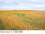 Купить «Поле с созревшим овсом», фото № 1738590, снято 22 августа 2009 г. (c) Алёшина Оксана / Фотобанк Лори