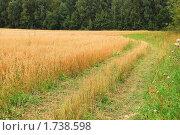 Купить «Поле с созревшим овсом», фото № 1738598, снято 22 августа 2009 г. (c) Алёшина Оксана / Фотобанк Лори