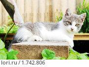 Котёнок. Стоковое фото, фотограф Арти Homa / Фотобанк Лори