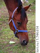 Лошадь. Стоковое фото, фотограф Захарина Татьяна / Фотобанк Лори
