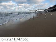 Купить «Чайки, сидящие на берегу», эксклюзивное фото № 1747566, снято 8 января 2009 г. (c) Svet / Фотобанк Лори