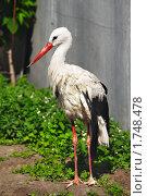 Купить «Аист», фото № 1748478, снято 21 мая 2010 г. (c) Сергей Рыжов / Фотобанк Лори