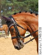 Гнедая лошадь. Стоковое фото, фотограф Струкова Светлана / Фотобанк Лори
