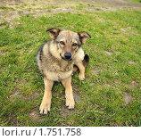 Пёс. Стоковое фото, фотограф Любовь Сафонова / Фотобанк Лори