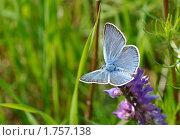 Купить «Бабочка на цветке», фото № 1757138, снято 7 июня 2010 г. (c) Владимир Соловьев / Фотобанк Лори