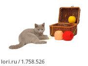Купить «Британский голубой кот возле корзинки с нитками», эксклюзивное фото № 1758526, снято 14 марта 2010 г. (c) Вячеслав Палес / Фотобанк Лори