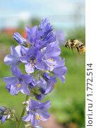 Пчела у цветка. Стоковое фото, фотограф павлычев евгений / Фотобанк Лори