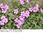 Цветы. Стоковое фото, фотограф павлычев евгений / Фотобанк Лори