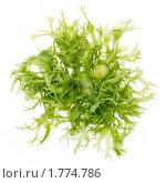 Купить «Салат из водорослей Тосака на белом фоне», фото № 1774786, снято 7 ноября 2009 г. (c) Лисовская Наталья / Фотобанк Лори