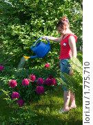 Купить «Красивая девушка поливает пионы из лейки», эксклюзивное фото № 1775710, снято 12 июня 2010 г. (c) Юрий Морозов / Фотобанк Лори