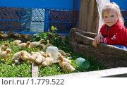 Купить «Девочка наблюдает за маленькими утятами», фото № 1779522, снято 25 апреля 2010 г. (c) LenaLeonovich / Фотобанк Лори