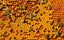 Соты с пергой и расплодом, фото № 1780066, снято 13 июня 2010 г. (c) Андрей Давиденко / Фотобанк Лори