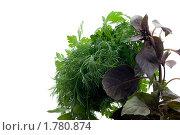 Купить «Пучок свежей зелени на белом фоне», фото № 1780874, снято 15 июня 2010 г. (c) Владимир Белобаба / Фотобанк Лори
