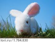 Купить «Игрушечный кролик», фото № 1784830, снято 7 апреля 2009 г. (c) hunta / Фотобанк Лори