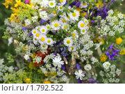 Купить «Цветы полевые», фото № 1792522, снято 20 июня 2010 г. (c) Михаил Рыбачек / Фотобанк Лори