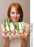 Купить «Луковый ассортимент», фото № 1795902, снято 24 июня 2010 г. (c) Валерий Степанов / Фотобанк Лори